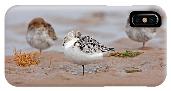 Sanderling Roost IPhone Case