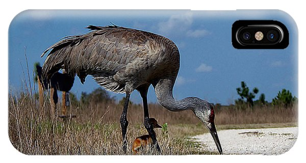 Sandhill Crane 037  IPhone Case