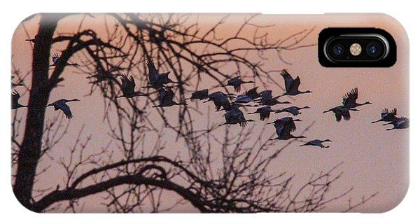 Sandhill Crane Across The Sky Phone Case by Jill Bell
