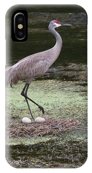 Sandhill Crane And Eggs IPhone Case