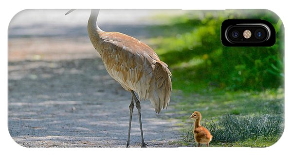 Sandhill Crane Colt IPhone Case
