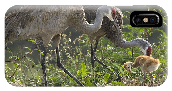 Sandhill Crane Family IPhone Case