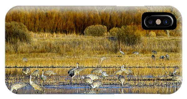 Sandhill Flock In Fall IPhone Case