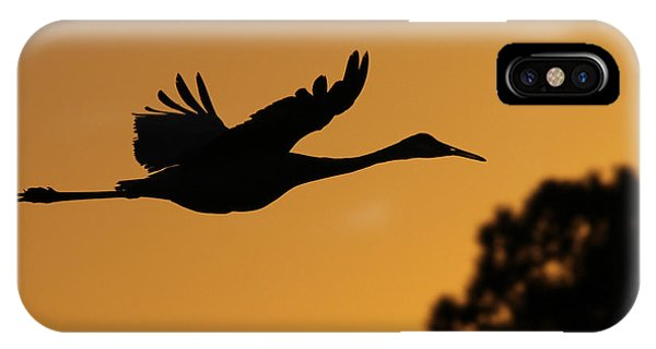 Sandhill Crane In Flight IPhone Case