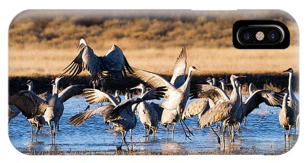 Cranes Dance For Joy IPhone Case