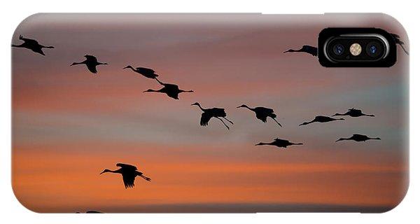 Sandhill Cranes Landing At Sunset IPhone Case