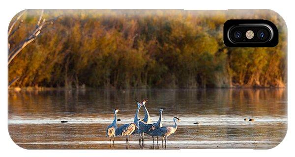 Six Sandhill Cranes IPhone Case