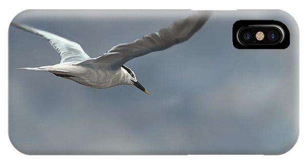 Sea Life iPhone Case - Sandwich Tern by Aaron Blaise