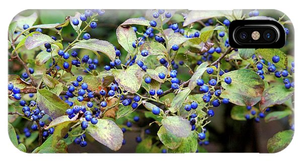Blue Berry iPhone Case - Sapphire Berries (symplocos Paniculata ) by Frank M Hough