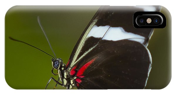 Sara Longwing IPhone Case