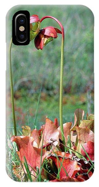 Sarracenia Purpurea Phone Case by Bob Gibbons/science Photo Library