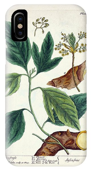 Sassafras Plant Phone Case by National Library Of Medicine