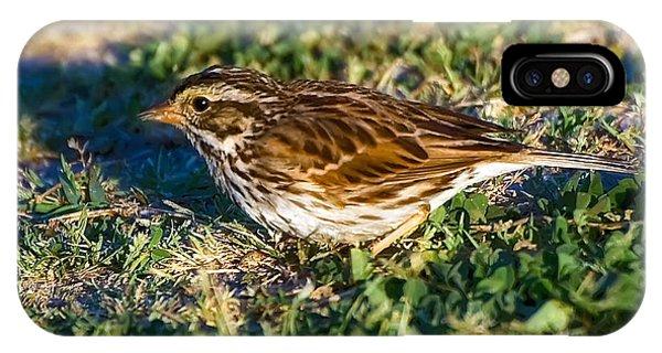 Wakulla iPhone Case - Savannah Sparrow by Rich Leighton