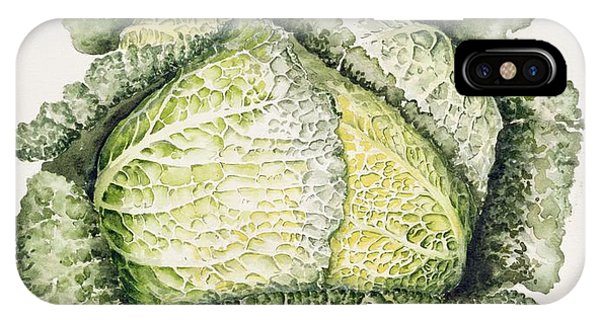 Organic Foods iPhone Case - Savoy Cabbage  by Alison Cooper