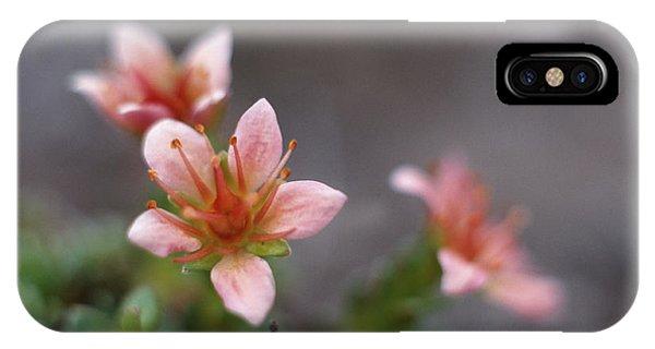 Saxifraga Nathorstii Flowers Phone Case by Simon Fraser/science Photo Library
