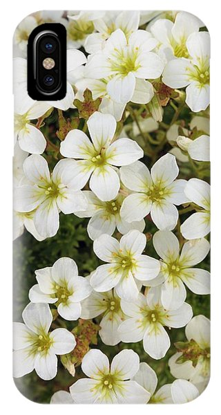 Saxifraga 'white Star' Phone Case by Geoff Kidd/science Photo Library