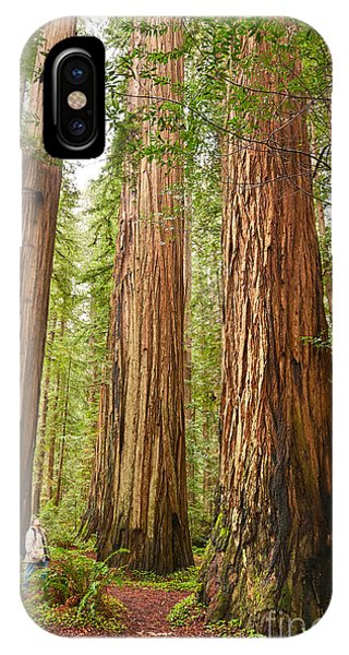 Tree iPhone Case - Scale - The Beautiful And Massive Giant Redwoods Sequoia Sempervirens In Redwood National Park. by Jamie Pham