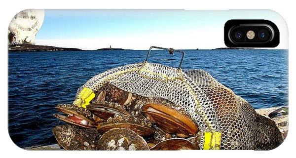 Scallops Bounty Of The Sea IPhone Case