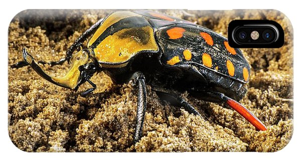 Coleoptera iPhone Case - Scarab Beetle On A Flower by Philippe Psaila