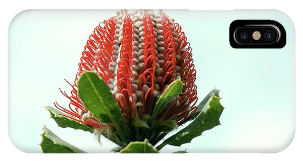 Scarlet iPhone Case - Scarlet Banksia (banksia Coccinea) by Adrian Thomas
