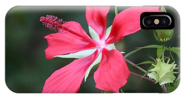 Scarlet Hibiscus #3 IPhone Case