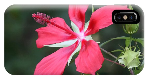 Scarlet Hibiscus #3 IPhone Case