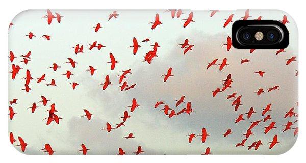 Scarlet iPhone Case - Scarlet Ibis Flock by Bob Gibbons