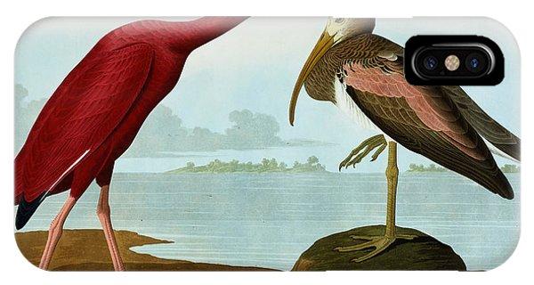 Ibis iPhone Case - Scarlet Ibis by John James Audubon