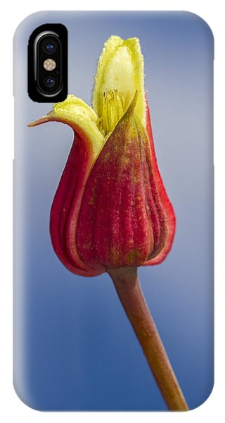 Scarlet Leatherflower IPhone Case