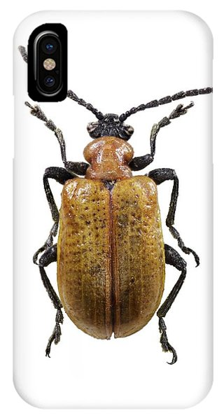Scarlet iPhone Case - Scarlet Lily Beetle by F. Martinez Clavel