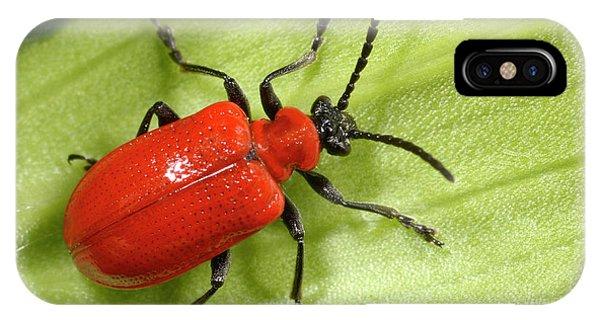 Scarlet iPhone Case - Scarlet Lily Beetle by Nigel Downer