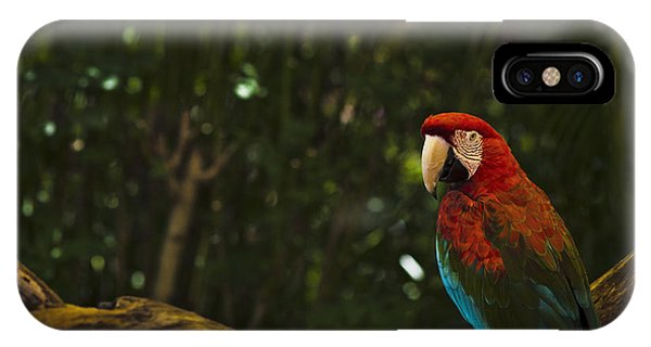 Scarlet Macaw Profile IPhone Case