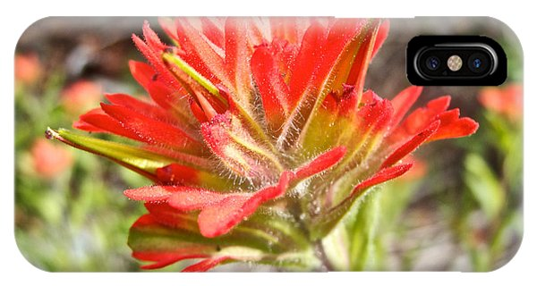 Scarlet Paintbrush iPhone Case - Scarlet Paintbrush Along John's Lake Trail In Glacier Np-mt by Ruth Hager