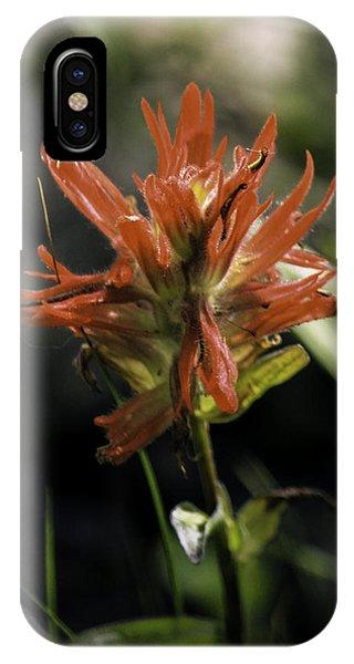 Scarlet Paintbrush iPhone Case - Scarlet Paintbrush by Paul Shefferly