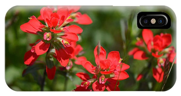 Scarlet Paintbrush iPhone Case - Scarlet Paintbrush. Texas Wildflowers. Castilleja_indivisa by Connie Fox