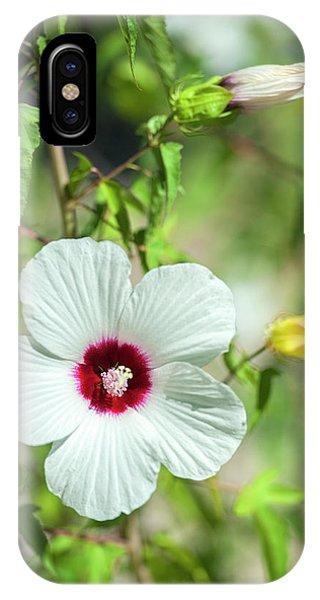 Scarlet iPhone Case - Scarlet Rose-mallow, Austin, Texas, Usa by Jim Engelbrecht