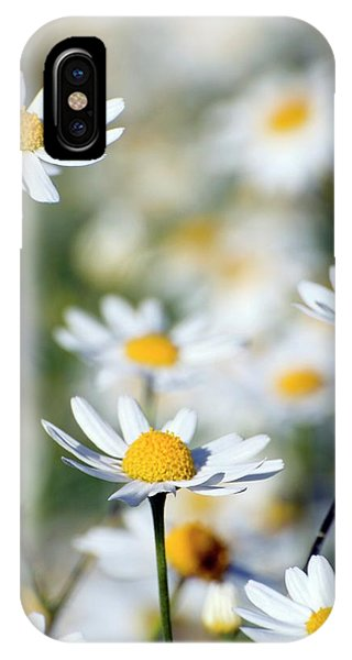 Scentless Mayweed (matricaria Maritima) Phone Case by Dr. John Brackenbury/science Photo Library