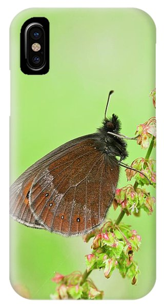 Scotch Argus Butterfly On A Dock Plant Phone Case by Bob Gibbons