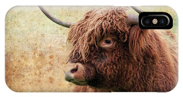 Scottish Highland Steer IPhone Case