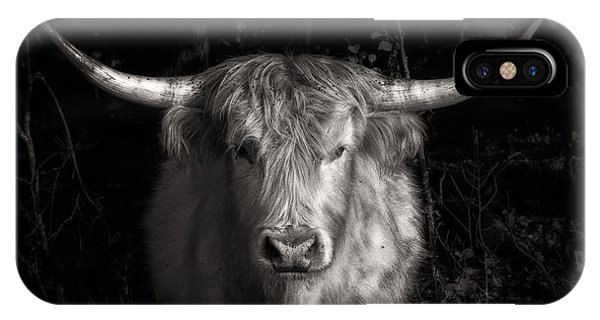 Scottish Highlander Bull IPhone Case