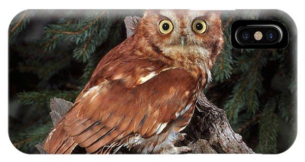 Wildlife Er iPhone Case - Screech Owl by ER Degginger