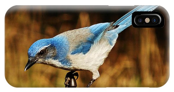 Scrub Jay IPhone Case