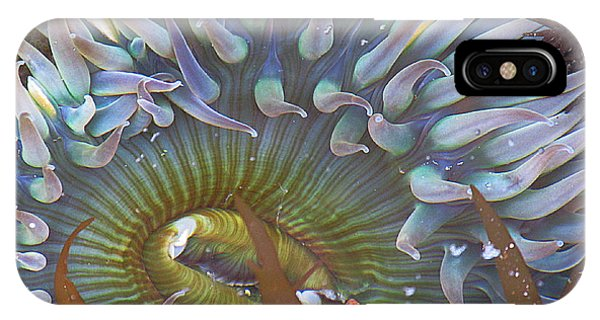 Sea Anemone Phone Case by Donna Leach