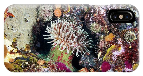 Sea Floor iPhone Case - Sea Anemones And Marine Life by Alexander Semenov/science Photo Library