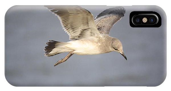Sea Bird IPhone Case