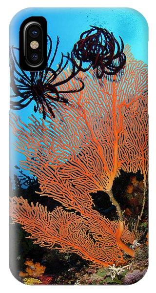 Sea Fan (gorgonia Phone Case by Pete Oxford