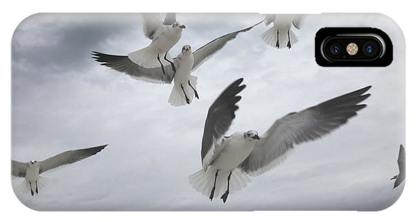 Sea Gull Aggression IPhone Case