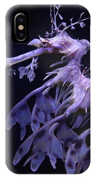 Sea Horse IPhone Case