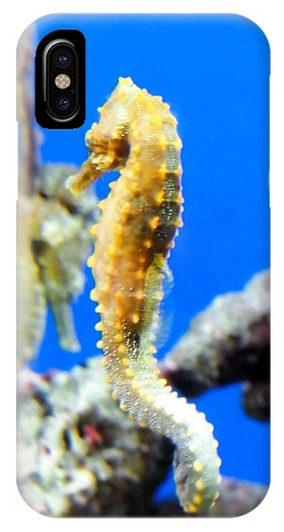 Sea Horses IPhone Case