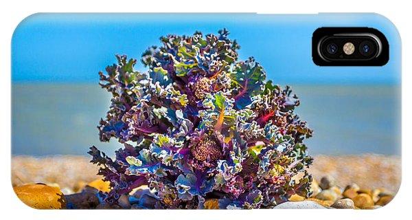 Sea Kale. IPhone Case